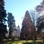 Árboles Gigantes del Real Sitio de La Granja de San Ildefonso, en Segovia.